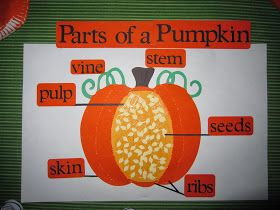 parts of a pumpkin diagram total teach week fall preschool Painted Pumpkins