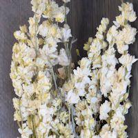 Dried White Larkspur Flowers For Sale | White Delphinium | Dried Larkpsur