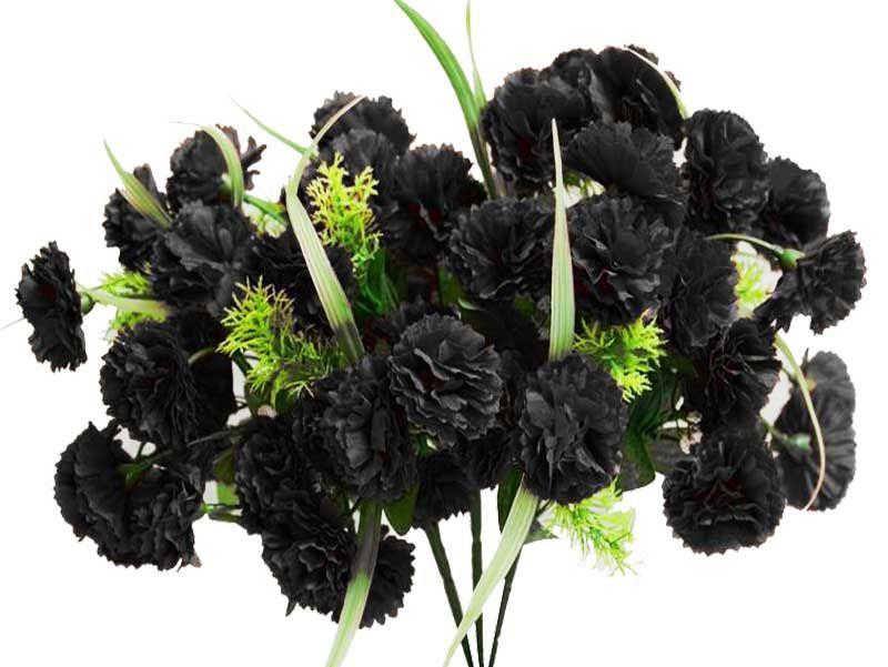 Black carnation gardening pinterest carnation flowers and gardens black carnation mightylinksfo