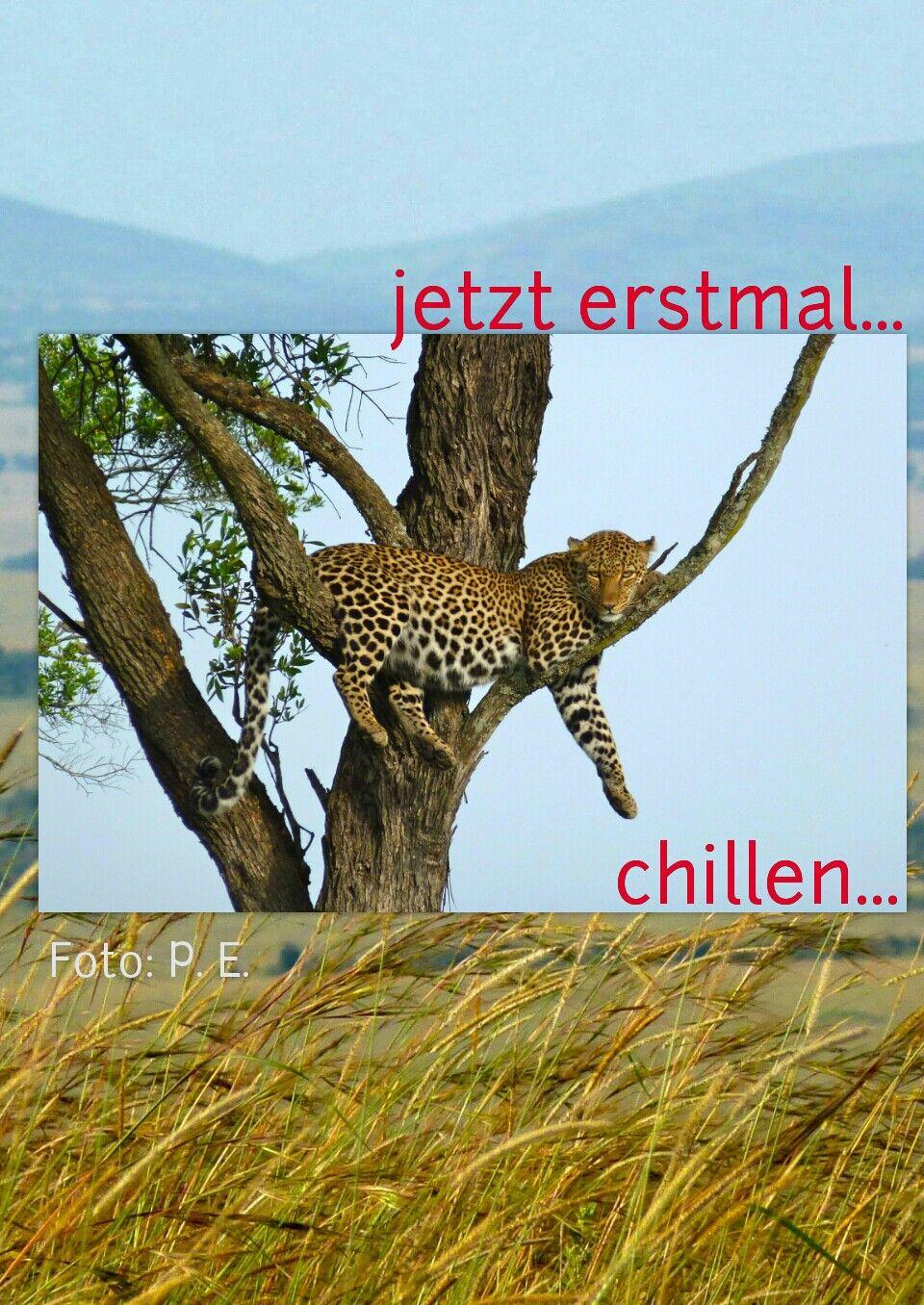 Tiere Afrika Massai Mara Gruesse Sprüche Witzige