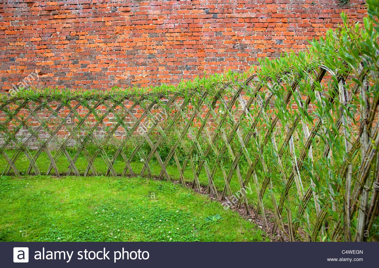 Live Willow Woven Screen Fencing Or Fedge England Uk With