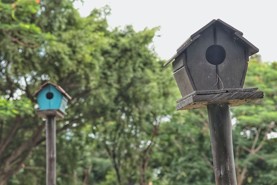 How to choose the right bird house for your favorite type