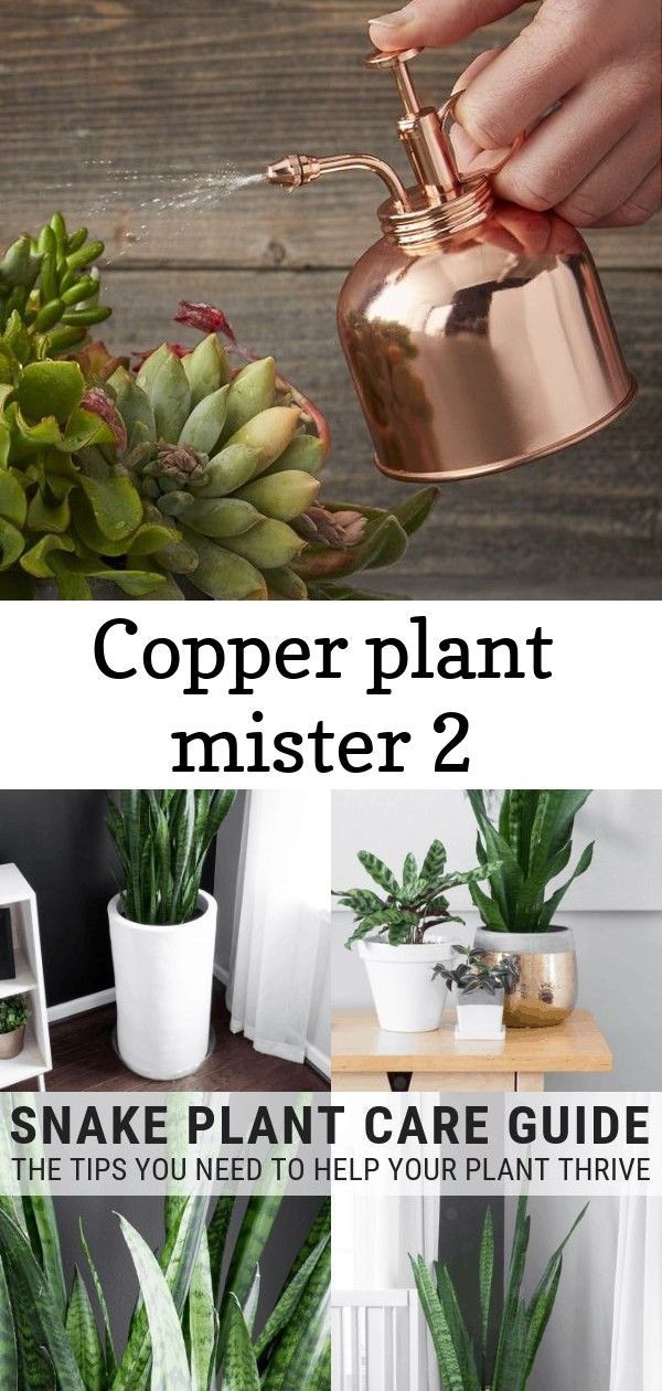 Makeup And Age Snake Plant Care Snake Plant Plant Care