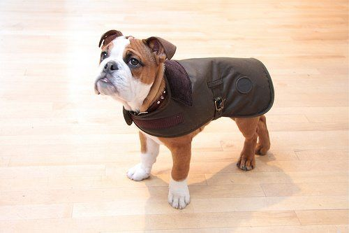 puppy barbour coat