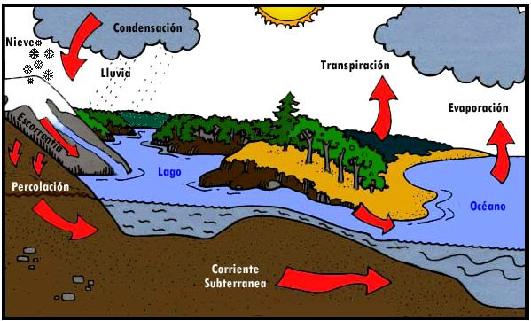 Ciclo Del Agua Explicativo Mediante Animación Ciclo Del Agua Ciclo Hidrologico Proyecto Agua