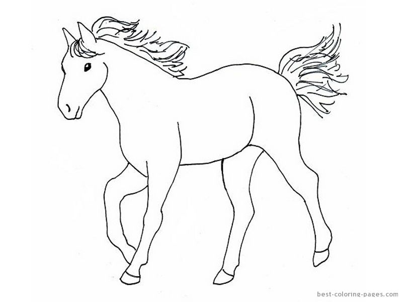 Simple Horse Drawings For Kids Images Pictures Becuo Horses