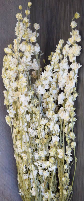 Dried White Larkspur Flowers For Sale Single Bunch By Dried Decor