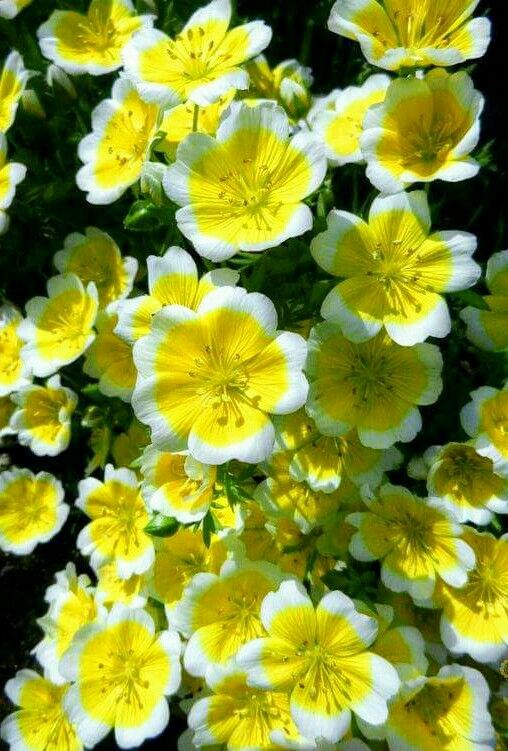 Really pretty yellow and white flowers 9 really pretty yellow and white flowers mightylinksfo