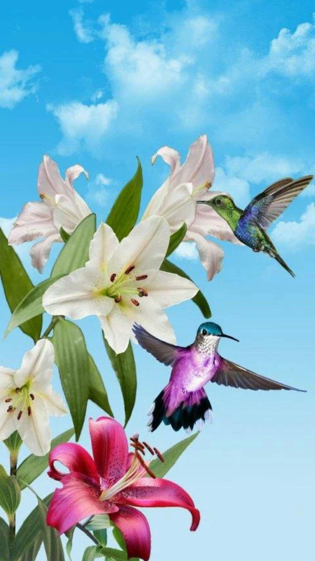 Hummingbirds Hummingbird Wallpaper Backgrounds Hummingbird Wallpaper Live Wallpapers