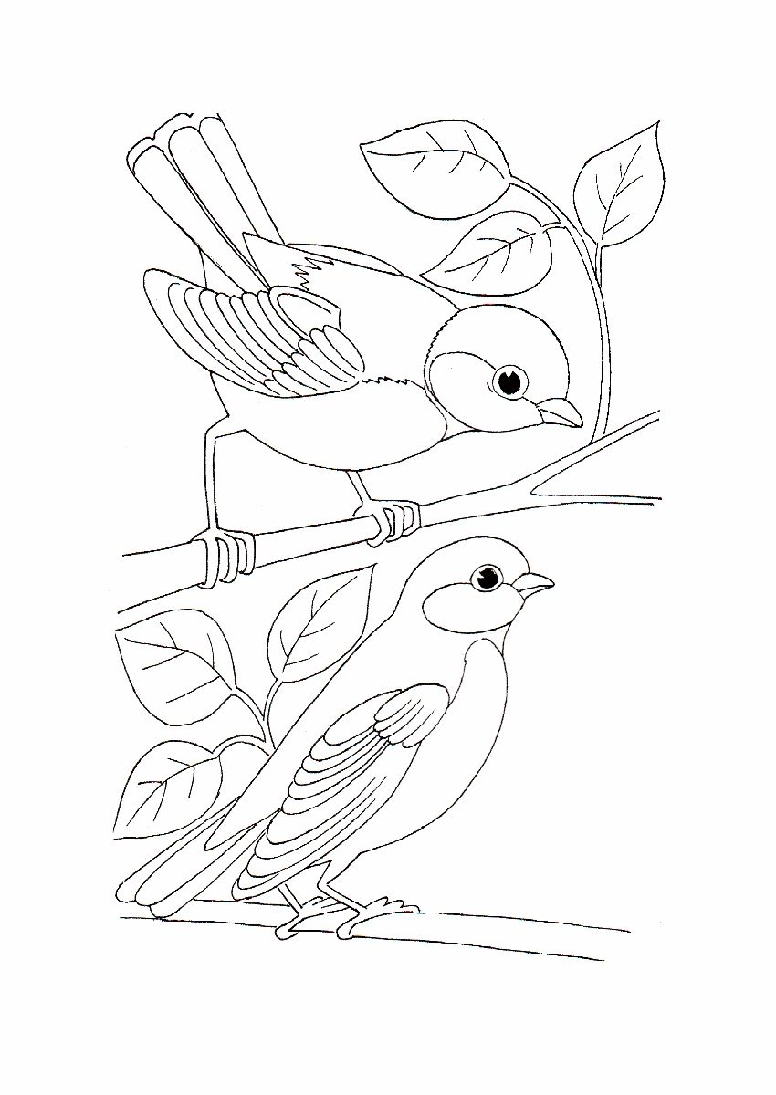 Simple Bird Coloring Pages Best Coloring Page Site Pajaros