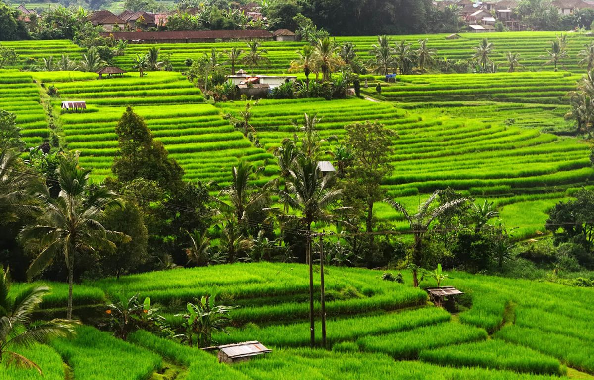 Jatiluwih Rice Terraces | Bali Central Mountains | Rice