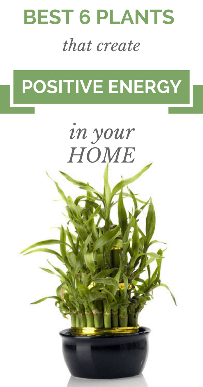 Best 6 Plants That Create Positive Energy In Your Home is part of Plants, House plants indoor, Best indoor plants, Positive energy, Indoor garden, Healing plants - According to many scientists there are a lot of plants which will provide positive energy, and in the same time absorbing the negative one  Here are 6 plants which will make your home full with positi