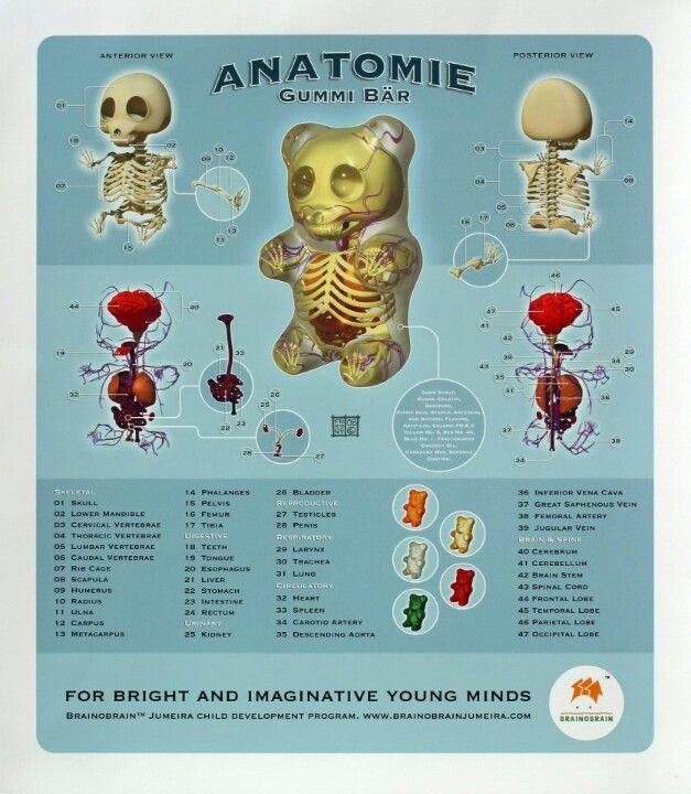 Anatomy Of A Gummy Bear Anatomy Pinterest Anatomy Gummy Bears