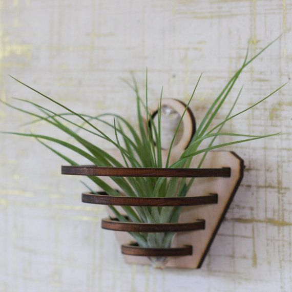 Air plant holder air plant hanger air plant hanging for Geometric air plant holder