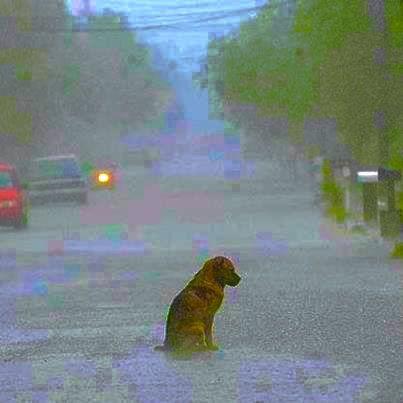 Chuva de +