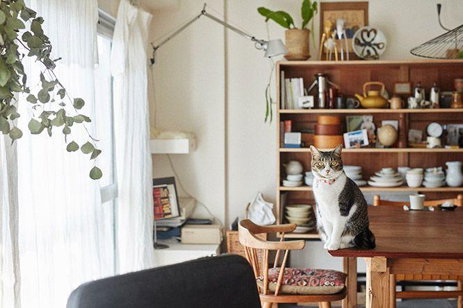 ilove.cat:インテリアスタイリスト・石井佳苗×ポポ、メグ、ハナオ-猫も人も居心地のよい空間づくり   カーサ ブルータス