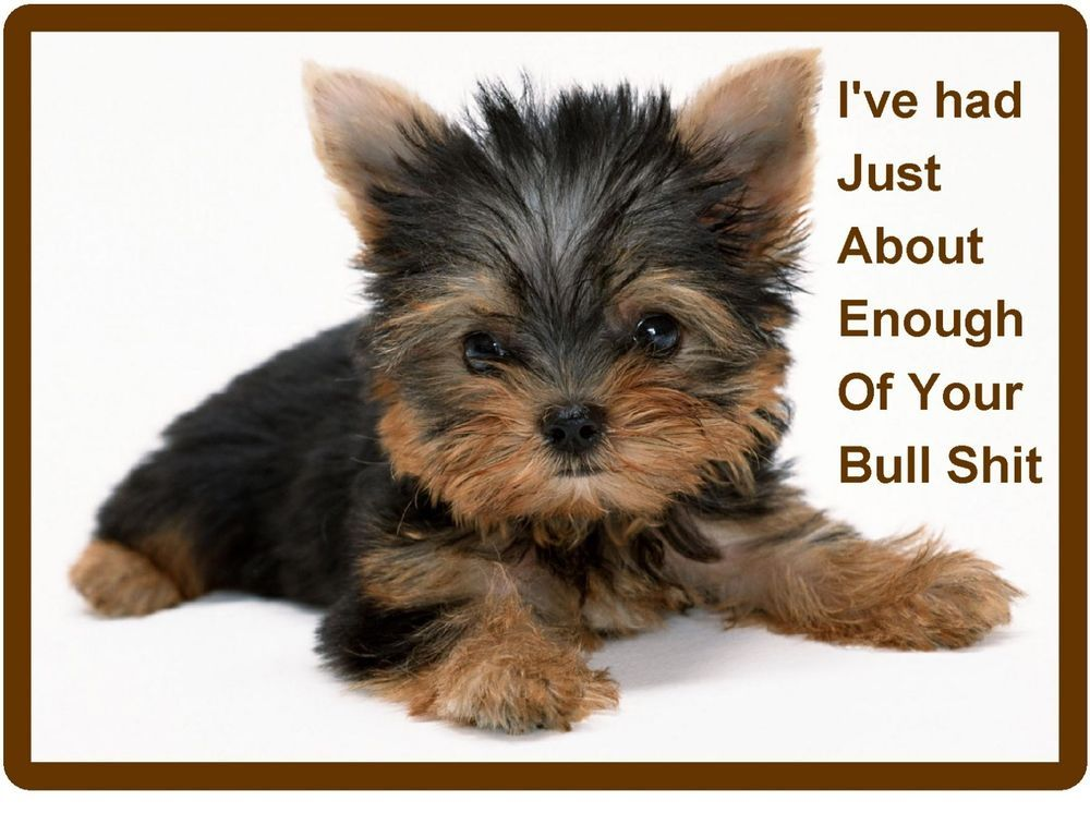 Funny Mad Dog Yorkie Yorkshire Refrigerator Tool Box Magnet Gift Card Insert Yorkie Dogs Yorkshire Terrier Puppies Terrier Puppies