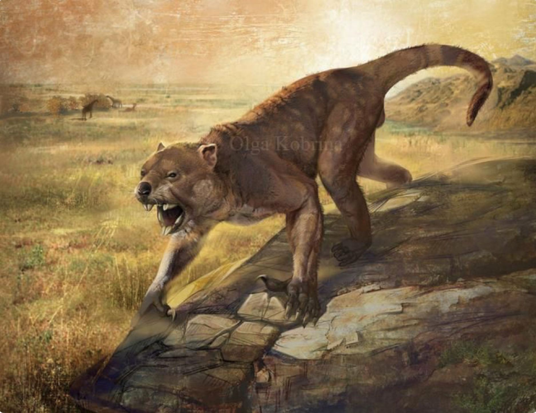 The Marsupial Lion Thylacoleo Carnifex Is An Extinct Species Of Carnivorous Marsupial That Lived In Ancient Animals Prehistoric Animals Prehistoric Creatures