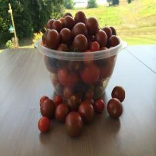 Preserving the Tomato Harvest - what to do with our hundreds of tomatoes....
