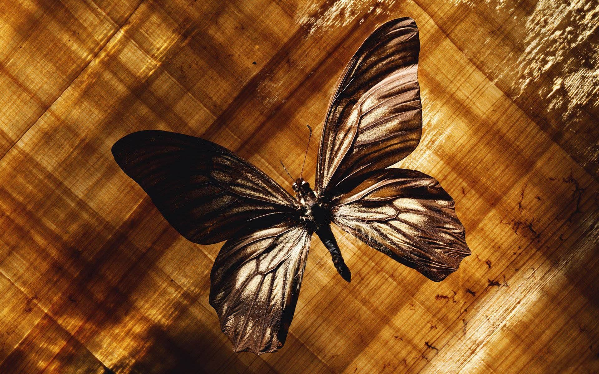 Pin by Patricia Disotell on Butterflies!! :)   Insect ...