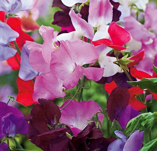 Daftar Nama Bunga Gambar Bunga Cantik Indah Unik Dan Langka Lengkap Dengan Penjelasannya Kumpulan Macam Macam Bunga Hias Terle Bunga Tanaman Asli Tanaman