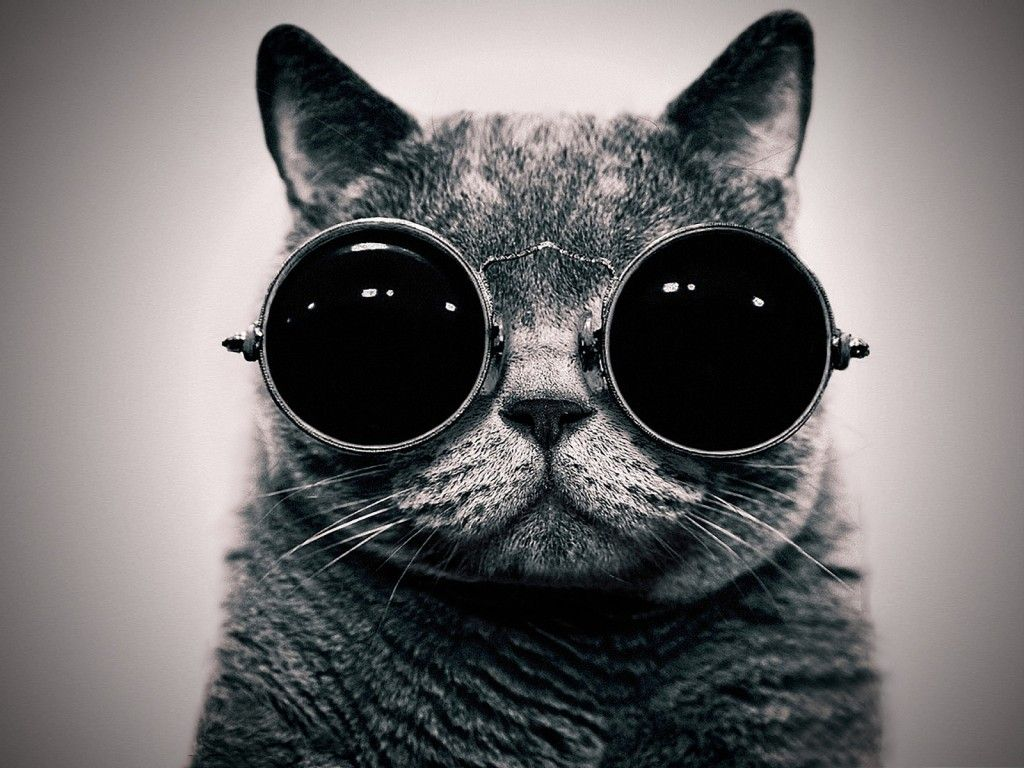 The Future Is Meow Cat Glasses Hipster Cat Cat Sunglasses