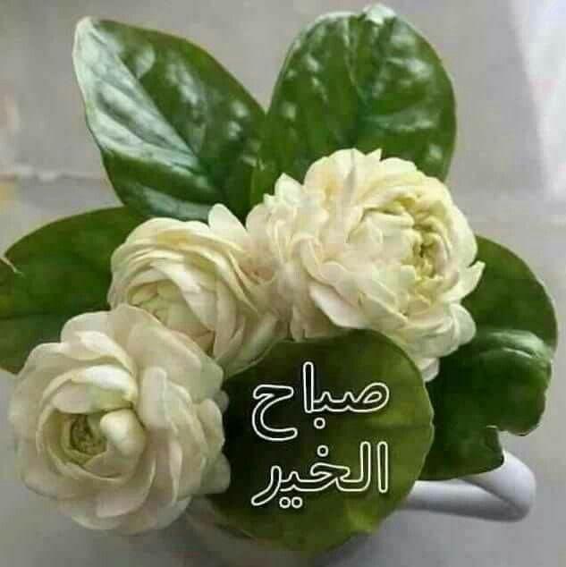 Pin By Gehane Habib On الصباح والمساء Good Morning Flowers Good Morning Arabic Good Morning Nature