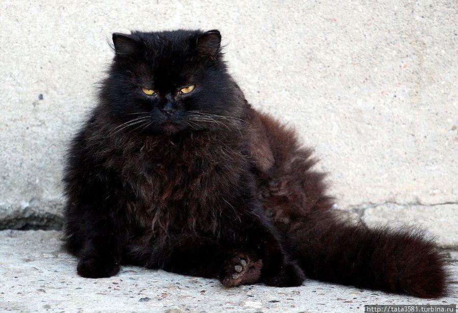 Уборщица пожалела зимой бедолагу, поставила пришлому черному котяре в нашем подъезде обувную коробку. Тот быстро в ней поселился вместе с новым именем. Надо отдать должное, категорически не гадил,…
