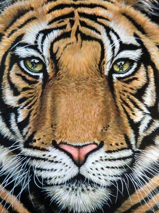 Pencil drawing of a beautiful tiger - pic no. 12