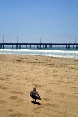Venice Beach or also known as the Baywatch Beach