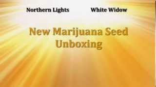 UnBoxing The Best Weed Seeds - Mail Order Marijuana Seeds