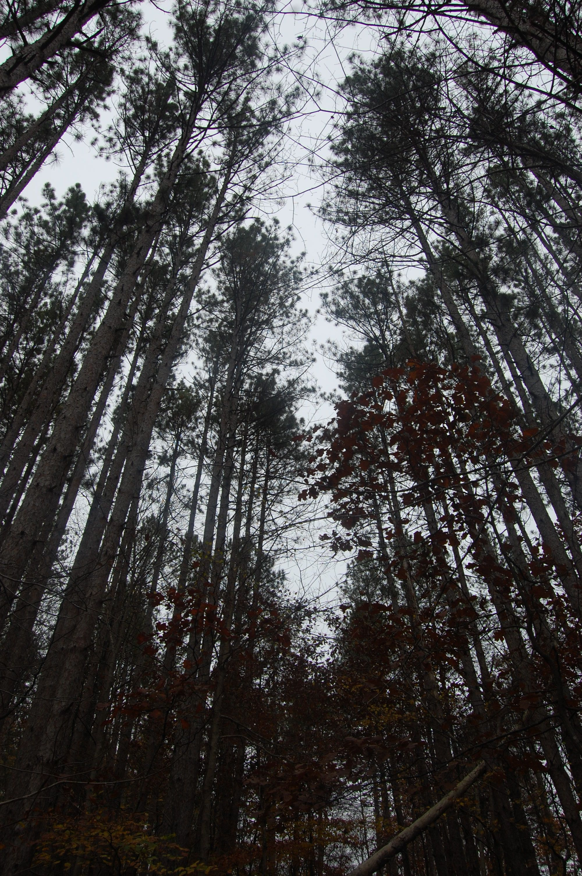 Another reason to love Brown County, IN- these trees go on for miles