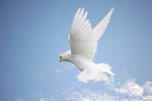 Freedom3 Dove Pictures Holy Spirit Dove Holy Spirit Come