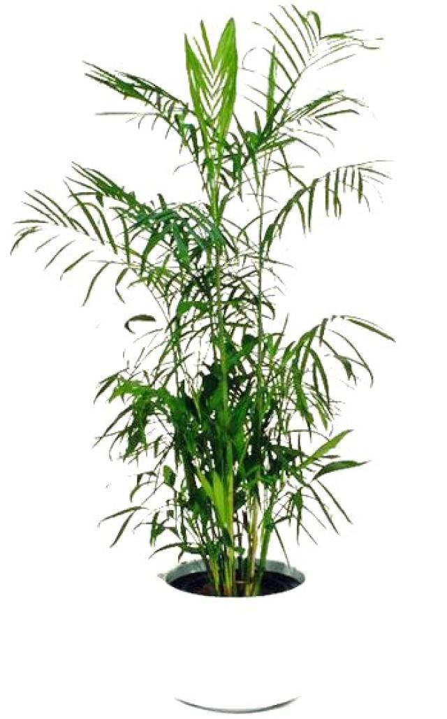 Air Purifying Plants For Bedroom: Great Feng Shui Plants For Purifying The Air