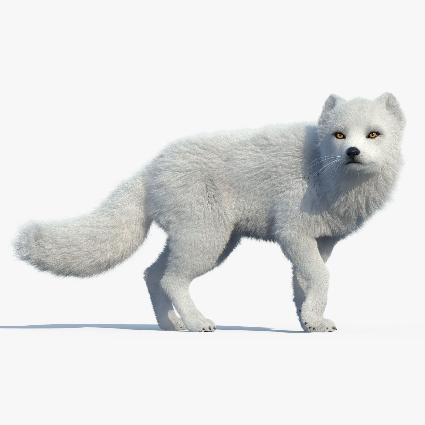 Arctic Fox FUR RIGGED by cgmobile. High Detailed