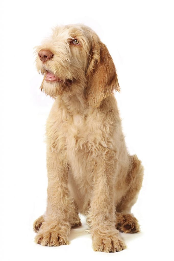 The 25 Most Expensive Dog Breeds You Can Buy Page 8 Of 26 Dog