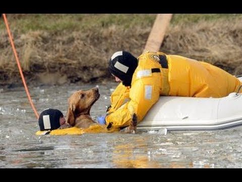 Rescue Is What It Is All About Restoring Faith In Humanity Https