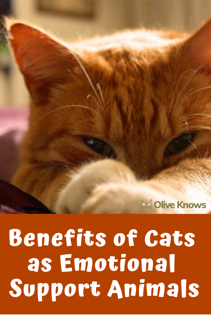 Benefits of Cats as Emotional Support Animals Emotional