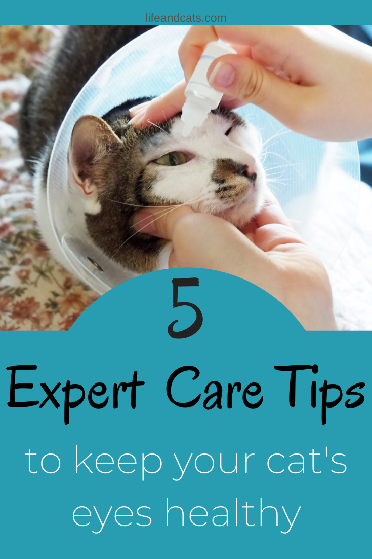 Learn about problems that can affect your cats eyes, how