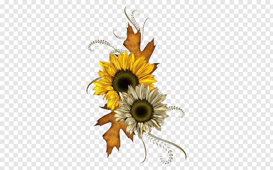 Common Sunflower Autumn Chrysanthemum Free Png Flower Illustration Sunflower Illustration Sunflower Drawing