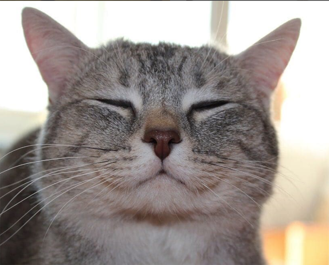 30 Happy Smiling Cats For Happy Cat Month Picture Gallery