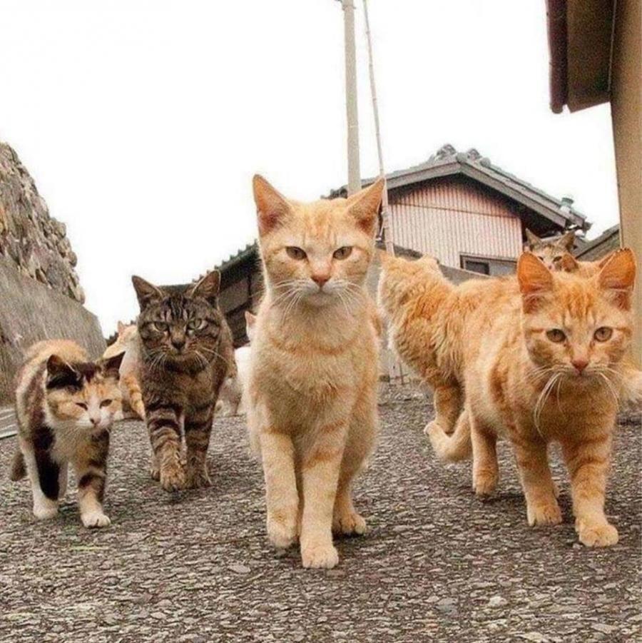 Gangsters Getigerte Katzen Hund Und Katze Ausgestopftes Tier