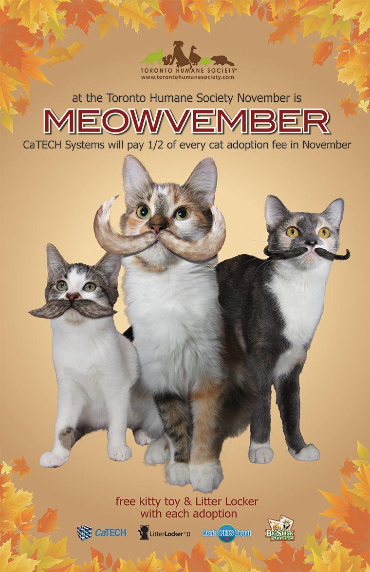 Meowvember At Toronto Humane Society Movember Animal Shelter Fundraiser Animal Shelter Design Cat Adoption