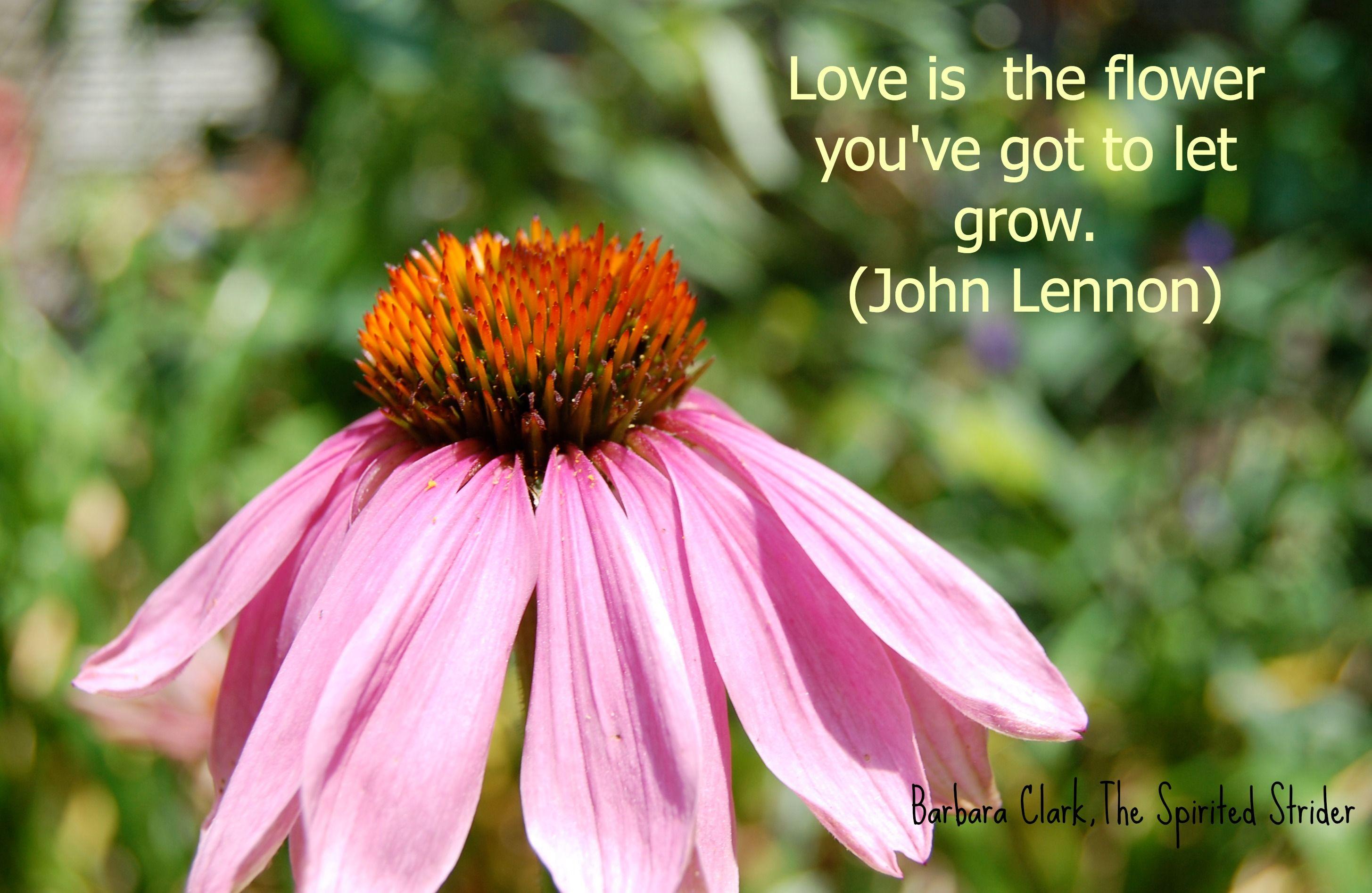Flower Love Flower Quotes Flower Quotes Love Flowers