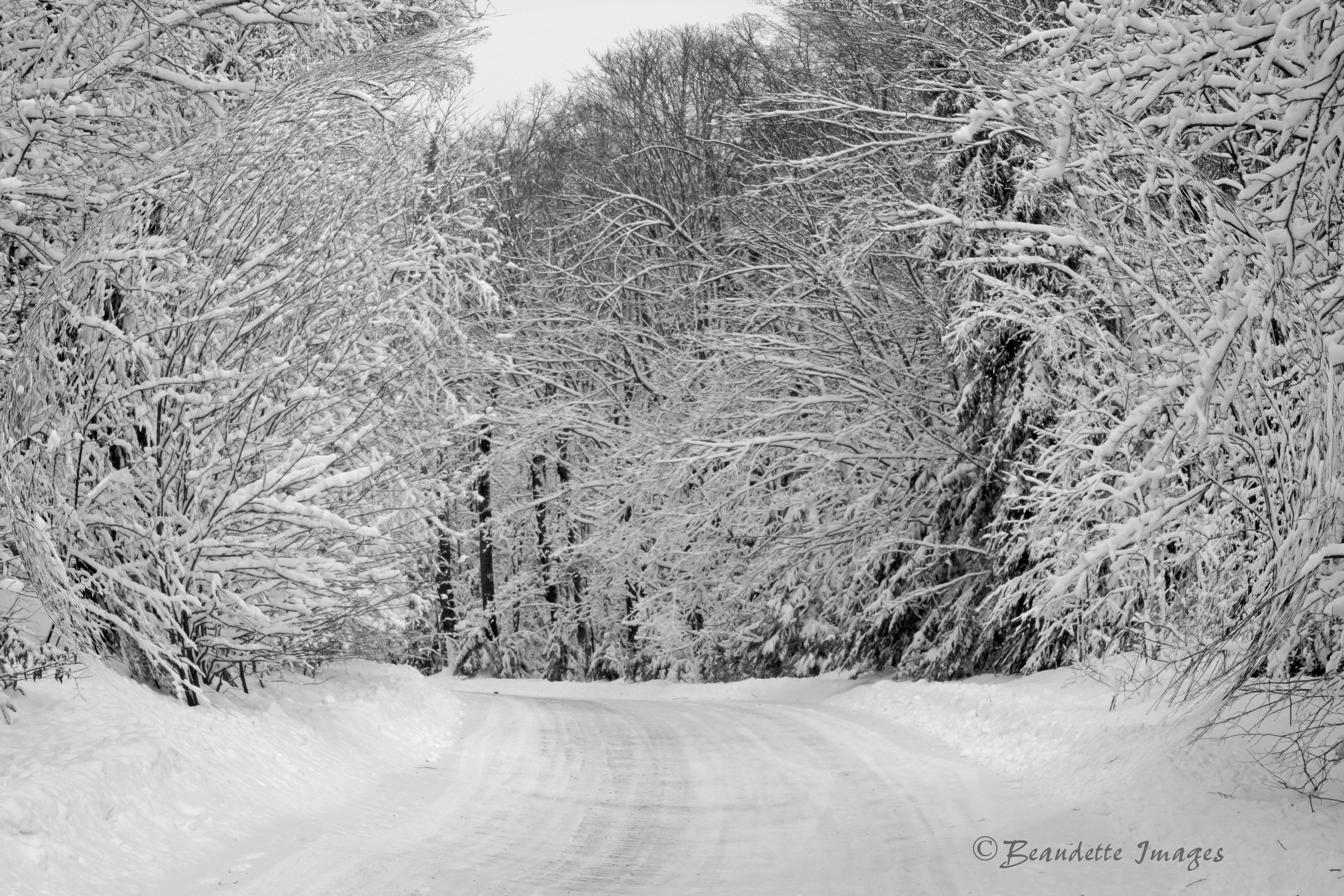 Snowy day on a country road.