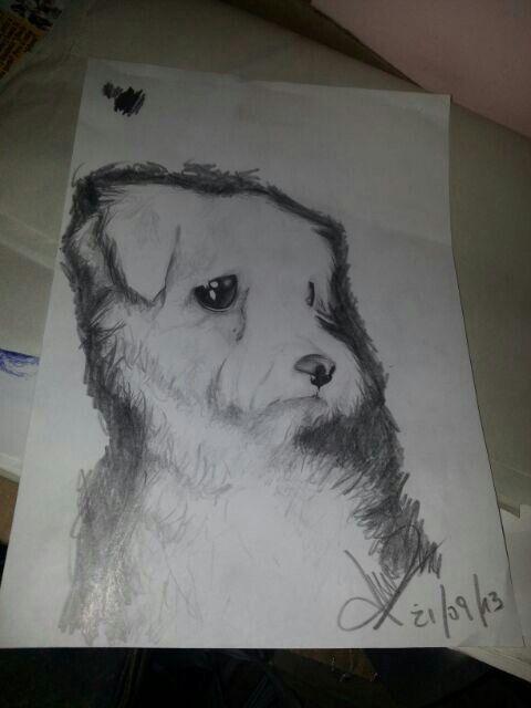 Dibujodrawin Perro Pequeño A Lapiz Esta De Perros Pinterest