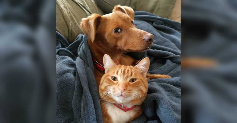 Dog And Cat Snuggle When Humans Are Away Dog Cat Cute Animals