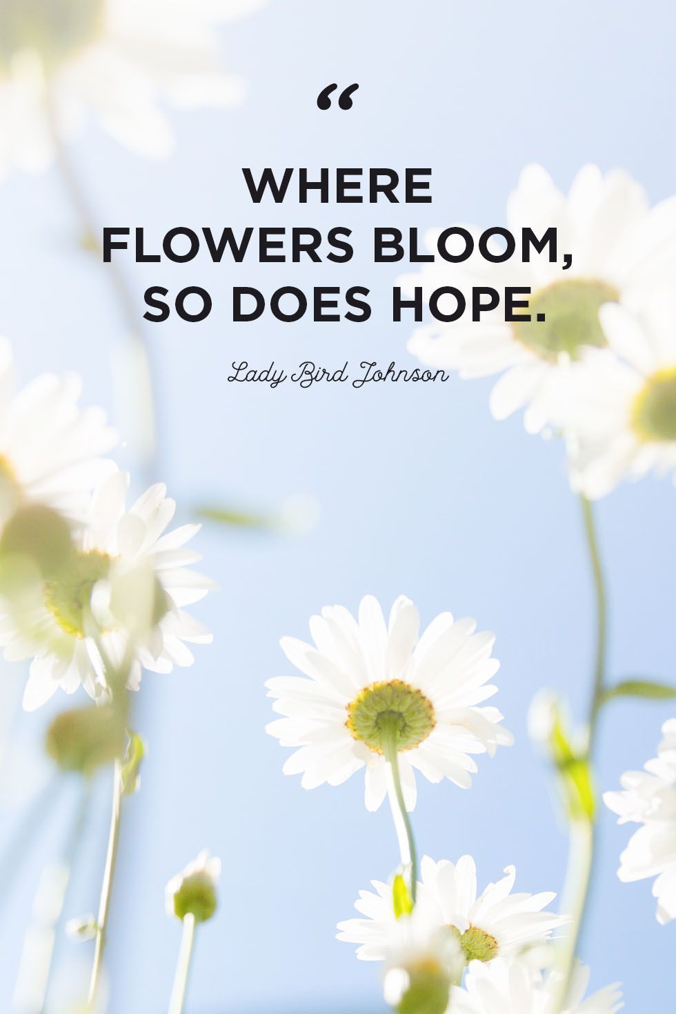 Flower Quotes To Inspire Growth Flower Quotes Inspirational Flower Quotes Bloom Quotes