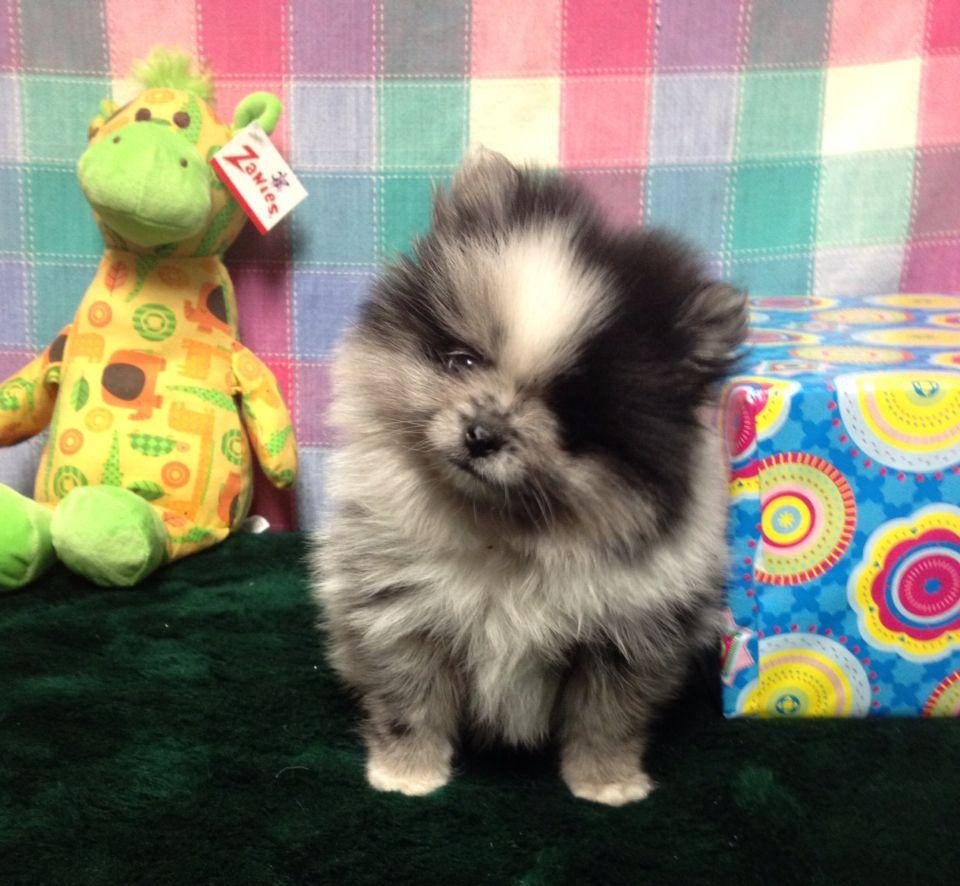 Facebook Fish And Pets Pet Shop Hendersonvillepetshop Com