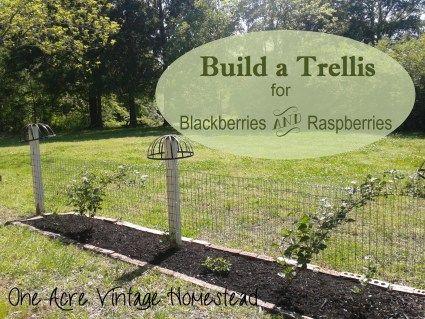 Bullet Journaling Garden Trellis Growing Raspberries